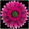 FlowerCare jeu