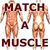 Match-A-Muscle jeu